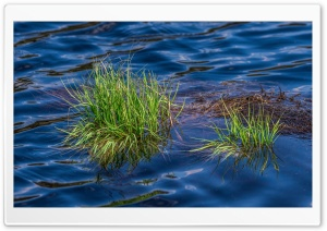 Grass in Lake HD Wide Wallpaper for Widescreen