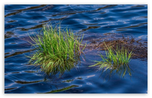 Grass in Lake ❤ 4K UHD Wallpaper for Wide 16:10 5:3 Widescreen WHXGA WQXGA WUXGA WXGA WGA ; 4K UHD 16:9 Ultra High Definition 2160p 1440p 1080p 900p 720p ; UHD 16:9 2160p 1440p 1080p 900p 720p ; Standard 4:3 5:4 3:2 Fullscreen UXGA XGA SVGA QSXGA SXGA DVGA HVGA HQVGA ( Apple PowerBook G4 iPhone 4 3G 3GS iPod Touch ) ; Smartphone 5:3 WGA ; Tablet 1:1 ; iPad 1/2/Mini ; Mobile 4:3 5:3 3:2 16:9 5:4 - UXGA XGA SVGA WGA DVGA HVGA HQVGA ( Apple PowerBook G4 iPhone 4 3G 3GS iPod Touch ) 2160p 1440p 1080p 900p 720p QSXGA SXGA ;