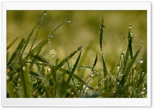 Grass In The Morning HD Wide Wallpaper for Widescreen