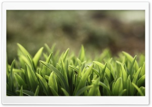 Grass Macro Ultra HD Wallpaper for 4K UHD Widescreen desktop, tablet & smartphone