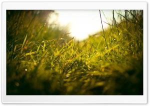 Grass Macro HD Wide Wallpaper for Widescreen