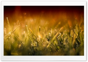 Grass Macro I HD Wide Wallpaper for Widescreen