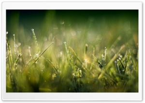 Grass Macro II HD Wide Wallpaper for Widescreen