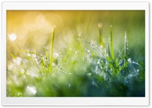 Grass Macro III HD Wide Wallpaper for Widescreen