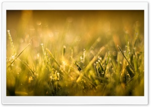 Grass Macro IV HD Wide Wallpaper for Widescreen