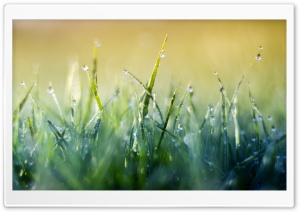 Grass Macro V HD Wide Wallpaper for Widescreen