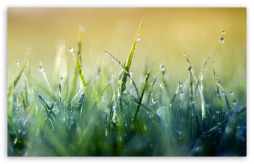 Grass Macro V HD wallpaper for Wide 16:10 5:3 Widescreen WHXGA WQXGA WUXGA WXGA WGA ; HD 16:9 High Definition WQHD QWXGA 1080p 900p 720p QHD nHD ; Standard 4:3 5:4 3:2 Fullscreen UXGA XGA SVGA QSXGA SXGA DVGA HVGA HQVGA devices ( Apple PowerBook G4 iPhone 4 3G 3GS iPod Touch ) ; Smartphone 5:3 WGA ; Tablet 1:1 ; iPad 1/2/Mini ; Mobile 4:3 5:3 3:2 16:9 5:4 - UXGA XGA SVGA WGA DVGA HVGA HQVGA devices ( Apple PowerBook G4 iPhone 4 3G 3GS iPod Touch ) WQHD QWXGA 1080p 900p 720p QHD nHD QSXGA SXGA ; Dual 16:10 5:3 16:9 4:3 5:4 WHXGA WQXGA WUXGA WXGA WGA WQHD QWXGA 1080p 900p 720p QHD nHD UXGA XGA SVGA QSXGA SXGA ;