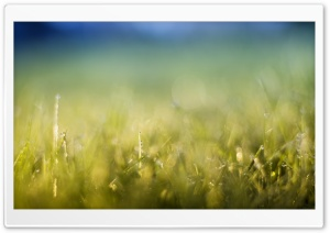 Grass Meadow HD Wide Wallpaper for Widescreen