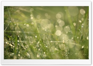 Grass Morning Dew Bokeh HD Wide Wallpaper for Widescreen