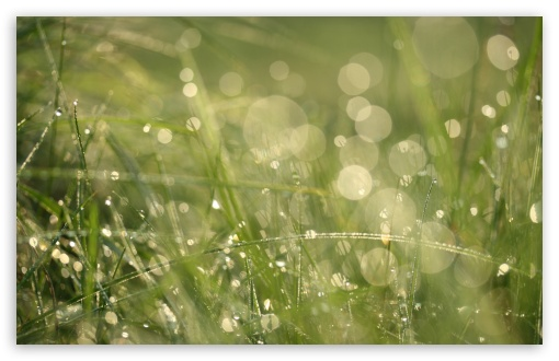 Grass Morning Dew Bokeh HD wallpaper for Wide 16:10 5:3 Widescreen WHXGA WQXGA WUXGA WXGA WGA ; HD 16:9 High Definition WQHD QWXGA 1080p 900p 720p QHD nHD ; UHD 16:9 WQHD QWXGA 1080p 900p 720p QHD nHD ; Standard 4:3 5:4 3:2 Fullscreen UXGA XGA SVGA QSXGA SXGA DVGA HVGA HQVGA devices ( Apple PowerBook G4 iPhone 4 3G 3GS iPod Touch ) ; Tablet 1:1 ; iPad 1/2/Mini ; Mobile 4:3 5:3 3:2 16:9 5:4 - UXGA XGA SVGA WGA DVGA HVGA HQVGA devices ( Apple PowerBook G4 iPhone 4 3G 3GS iPod Touch ) WQHD QWXGA 1080p 900p 720p QHD nHD QSXGA SXGA ; Dual 16:10 5:3 4:3 5:4 WHXGA WQXGA WUXGA WXGA WGA UXGA XGA SVGA QSXGA SXGA ;