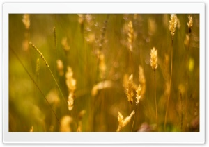 Grass Seeds HD Wide Wallpaper for Widescreen