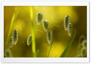 Grass Seeds Macro HD Wide Wallpaper for Widescreen