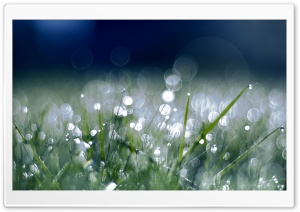 Grass Sparkle HD Wide Wallpaper for Widescreen