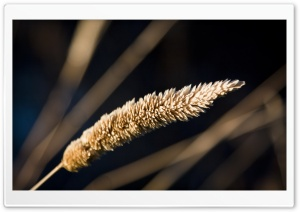 Grass Spikelets Macro HD Wide Wallpaper for Widescreen