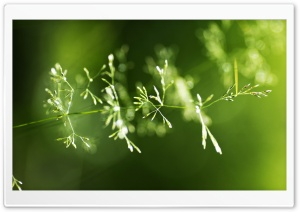 Grass Spikes Macro HD Wide Wallpaper for Widescreen