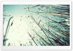 Grass Stems HD Wide Wallpaper for Widescreen