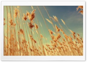 Grass Stems, Autumn HD Wide Wallpaper for Widescreen
