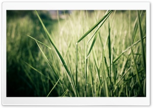 Grass Stems, Close Up HD Wide Wallpaper for Widescreen