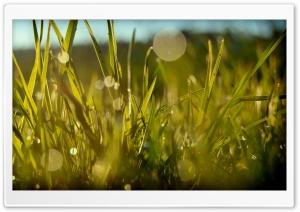 Grass, Summer Ultra HD Wallpaper for 4K UHD Widescreen desktop, tablet & smartphone