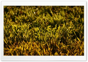 Grass, Summer HD Wide Wallpaper for Widescreen