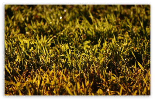 Grass, Summer ❤ 4K UHD Wallpaper for Wide 16:10 5:3 Widescreen WHXGA WQXGA WUXGA WXGA WGA ; 4K UHD 16:9 Ultra High Definition 2160p 1440p 1080p 900p 720p ; UHD 16:9 2160p 1440p 1080p 900p 720p ; Standard 4:3 5:4 3:2 Fullscreen UXGA XGA SVGA QSXGA SXGA DVGA HVGA HQVGA ( Apple PowerBook G4 iPhone 4 3G 3GS iPod Touch ) ; Tablet 1:1 ; iPad 1/2/Mini ; Mobile 4:3 5:3 3:2 16:9 5:4 - UXGA XGA SVGA WGA DVGA HVGA HQVGA ( Apple PowerBook G4 iPhone 4 3G 3GS iPod Touch ) 2160p 1440p 1080p 900p 720p QSXGA SXGA ; Dual 16:10 5:3 16:9 4:3 5:4 WHXGA WQXGA WUXGA WXGA WGA 2160p 1440p 1080p 900p 720p UXGA XGA SVGA QSXGA SXGA ;