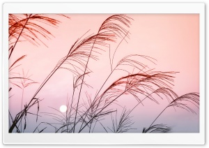 Grass, Sunset HD Wide Wallpaper for Widescreen