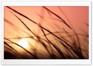 Grass, Sunset HD Wide Wallpaper for 4K UHD Widescreen desktop & smartphone