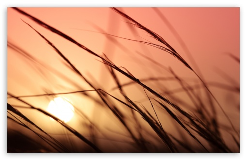 Grass, Sunset HD wallpaper for Wide 16:10 5:3 Widescreen WHXGA WQXGA WUXGA WXGA WGA ; HD 16:9 High Definition WQHD QWXGA 1080p 900p 720p QHD nHD ; UHD 16:9 WQHD QWXGA 1080p 900p 720p QHD nHD ; Standard 4:3 5:4 3:2 Fullscreen UXGA XGA SVGA QSXGA SXGA DVGA HVGA HQVGA devices ( Apple PowerBook G4 iPhone 4 3G 3GS iPod Touch ) ; Tablet 1:1 ; iPad 1/2/Mini ; Mobile 4:3 5:3 3:2 16:9 5:4 - UXGA XGA SVGA WGA DVGA HVGA HQVGA devices ( Apple PowerBook G4 iPhone 4 3G 3GS iPod Touch ) WQHD QWXGA 1080p 900p 720p QHD nHD QSXGA SXGA ; Dual 16:10 5:3 4:3 5:4 WHXGA WQXGA WUXGA WXGA WGA UXGA XGA SVGA QSXGA SXGA ;