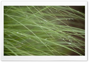 Grass Threads HD Wide Wallpaper for Widescreen