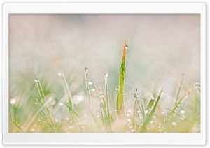 Grass Tuft HD Wide Wallpaper for Widescreen