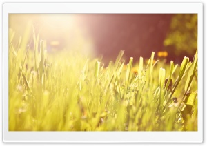 Grass Under Morning Light HD Wide Wallpaper for Widescreen