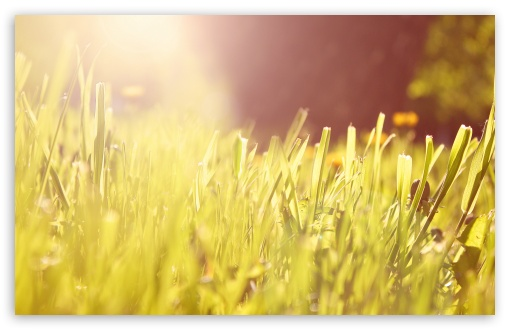 Grass Under Morning Light ❤ 4K UHD Wallpaper for Wide 16:10 5:3 Widescreen WHXGA WQXGA WUXGA WXGA WGA ; 4K UHD 16:9 Ultra High Definition 2160p 1440p 1080p 900p 720p ; UHD 16:9 2160p 1440p 1080p 900p 720p ; Standard 4:3 5:4 3:2 Fullscreen UXGA XGA SVGA QSXGA SXGA DVGA HVGA HQVGA ( Apple PowerBook G4 iPhone 4 3G 3GS iPod Touch ) ; Tablet 1:1 ; iPad 1/2/Mini ; Mobile 4:3 5:3 3:2 16:9 5:4 - UXGA XGA SVGA WGA DVGA HVGA HQVGA ( Apple PowerBook G4 iPhone 4 3G 3GS iPod Touch ) 2160p 1440p 1080p 900p 720p QSXGA SXGA ; Dual 16:10 5:4 WHXGA WQXGA WUXGA WXGA QSXGA SXGA ;