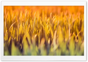 Grass Under Sun Light HD Wide Wallpaper for Widescreen