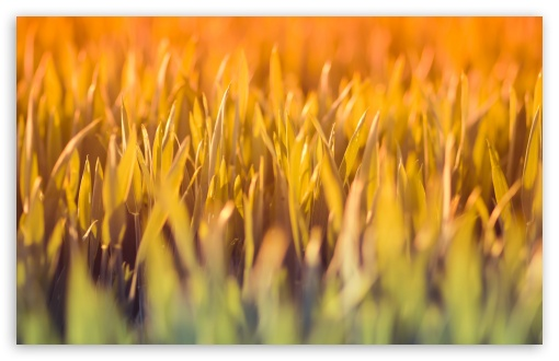 Grass Under Sun Light HD wallpaper for Wide 16:10 5:3 Widescreen WHXGA WQXGA WUXGA WXGA WGA ; HD 16:9 High Definition WQHD QWXGA 1080p 900p 720p QHD nHD ; Standard 4:3 5:4 3:2 Fullscreen UXGA XGA SVGA QSXGA SXGA DVGA HVGA HQVGA devices ( Apple PowerBook G4 iPhone 4 3G 3GS iPod Touch ) ; Tablet 1:1 ; iPad 1/2/Mini ; Mobile 4:3 5:3 3:2 16:9 5:4 - UXGA XGA SVGA WGA DVGA HVGA HQVGA devices ( Apple PowerBook G4 iPhone 4 3G 3GS iPod Touch ) WQHD QWXGA 1080p 900p 720p QHD nHD QSXGA SXGA ; Dual 16:10 5:3 16:9 4:3 5:4 WHXGA WQXGA WUXGA WXGA WGA WQHD QWXGA 1080p 900p 720p QHD nHD UXGA XGA SVGA QSXGA SXGA ;