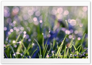 Grass With Morning Dew HD Wide Wallpaper for Widescreen
