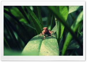 Grasshopper HD Wide Wallpaper for Widescreen