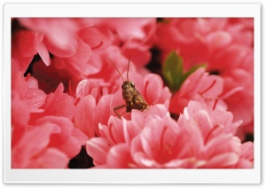 Grasshopper Among Flowers HD Wide Wallpaper for Widescreen
