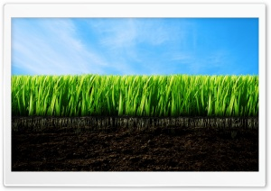 Grassroots HD Wide Wallpaper for Widescreen