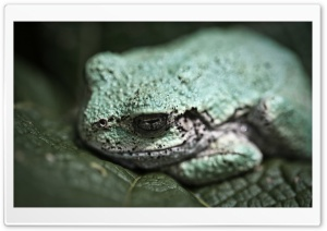 Gray TreeFrog Macro Ultra HD Wallpaper for 4K UHD Widescreen desktop, tablet & smartphone