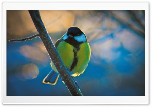 Great Tit HD Wide Wallpaper for Widescreen