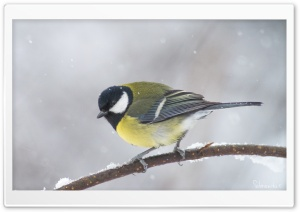 Great Tit In A Snowfall HD Wide Wallpaper for Widescreen
