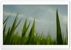 Green HD Wide Wallpaper for Widescreen