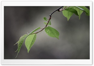 Green and Gray. Leaves HD Wide Wallpaper for Widescreen