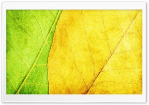 Green And Yellow Leaves Texture HD Wide Wallpaper for Widescreen