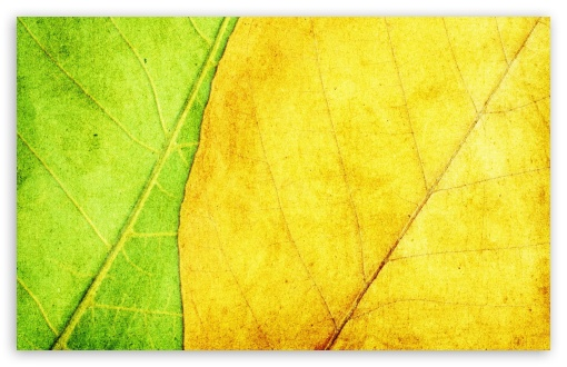 Green And Yellow Leaves Texture HD wallpaper for Wide 16:10 5:3 Widescreen WHXGA WQXGA WUXGA WXGA WGA ; HD 16:9 High Definition WQHD QWXGA 1080p 900p 720p QHD nHD ; Standard 3:2 Fullscreen DVGA HVGA HQVGA devices ( Apple PowerBook G4 iPhone 4 3G 3GS iPod Touch ) ; Mobile 5:3 3:2 16:9 - WGA DVGA HVGA HQVGA devices ( Apple PowerBook G4 iPhone 4 3G 3GS iPod Touch ) WQHD QWXGA 1080p 900p 720p QHD nHD ;