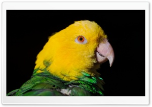 Green And Yellow Parrot HD Wide Wallpaper for Widescreen