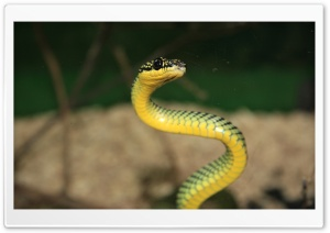 Green And Yellow Snake HD Wide Wallpaper for Widescreen