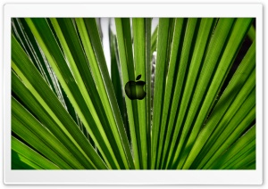 Green Apple Ultra HD Wallpaper for 4K UHD Widescreen desktop, tablet & smartphone