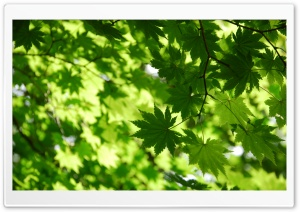 Green Autumn HD Wide Wallpaper for Widescreen