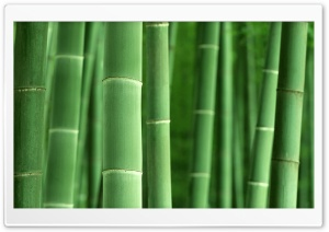 Green Bamboo HD Wide Wallpaper for Widescreen